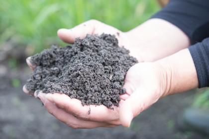 城島の土壌と相性のいいにんにく