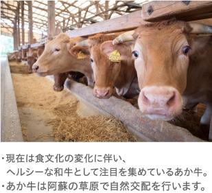 あか牛の魅力