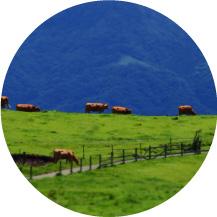 草原を守る